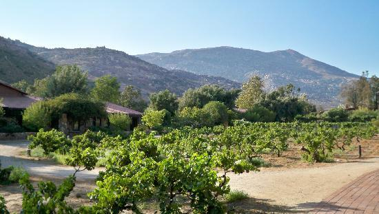 Rancho La Puerta Spa: View of the vineyard and running track