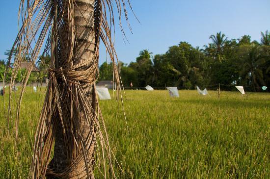 ซาเนีย บังกะโล: 5 Minute drive to rice fields