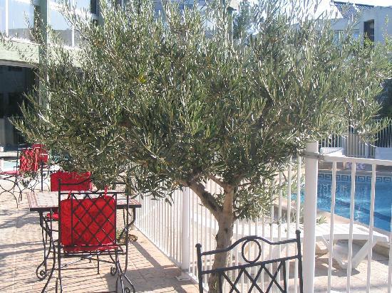 Le Tropic Hotel: olivier sur la terrasse