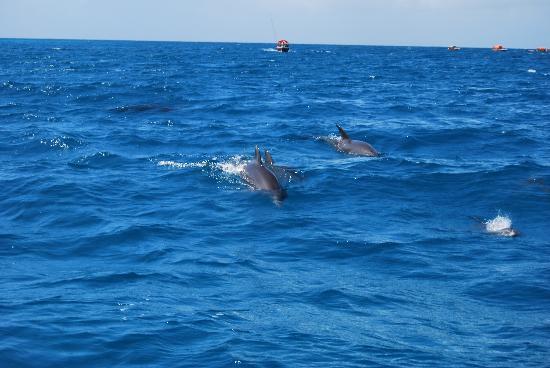 Sunset Beach Resort Zanzibar: Delfini a Kizimkazi