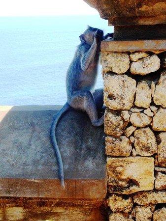 เปจาตู , อินโดนีเซีย: and a monkey attached