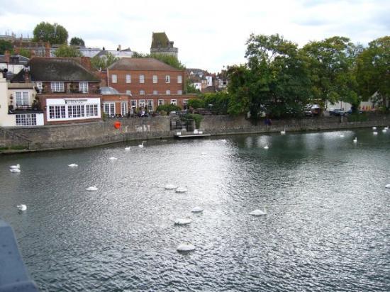 วินด์เซอร์, UK: Swans on the Thames