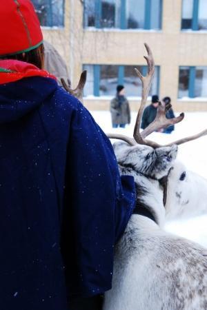 อูเมอา, สวีเดน: Sami Girl and reindeer