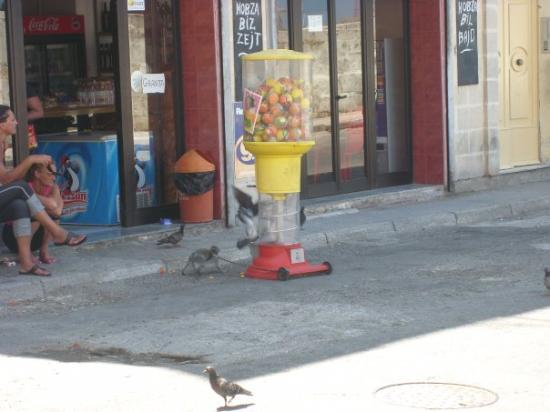 วัลเลตตา, มอลตา: Tak část Evropy jsem už procestoval, ale čtyřnohýho holuba jsem teda ještě neviděl... :-)