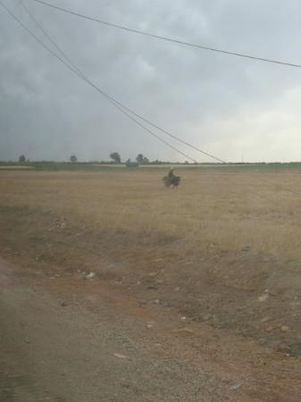 คาซาบลังกา, โมร็อกโก: Dans le bus... ...Un âne..(et des cheveux devant l'objectif...) Entre Mohammedia et Benslimane