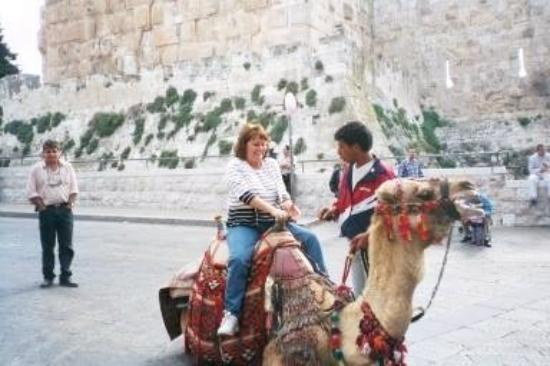 Old City of Jerusalem: A colleague riding a camel just outside the Old City