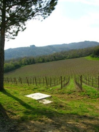 เซียนา, อิตาลี: Vineyards of Castelo D'Albola.