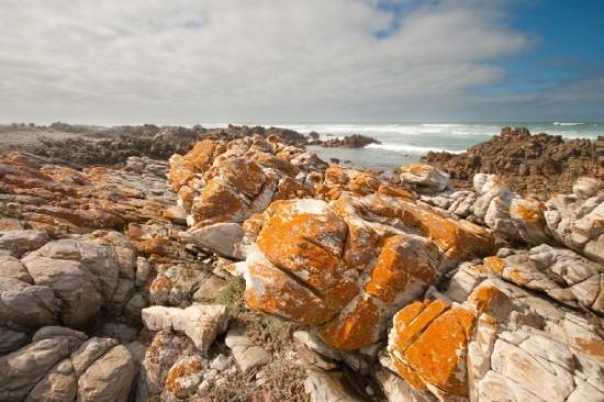 Cape Agulhas ภาพถ่าย