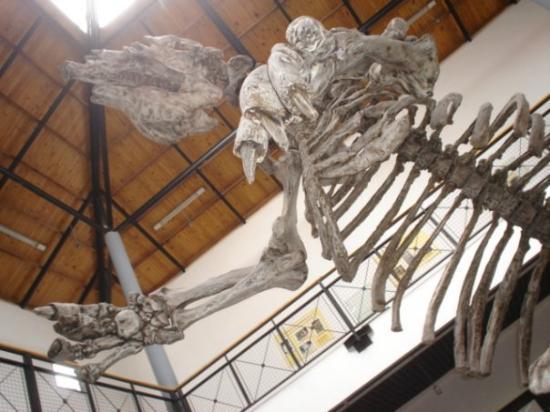 Rio Gallegos, อาร์เจนตินา: Monstro!