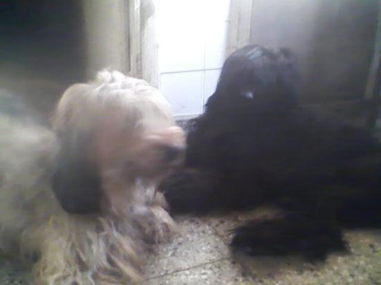 Vicente Lopez, อาร์เจนตินา: Grisel y Iara
