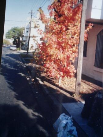 Vicente Lopez, อาร์เจนตินา: Arbolitos de otoño tomados por la camara de papi