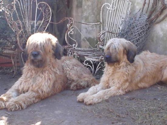 Vicente Lopez, อาร์เจนตินา: Nash y Fiona...contemplando el asado ♥