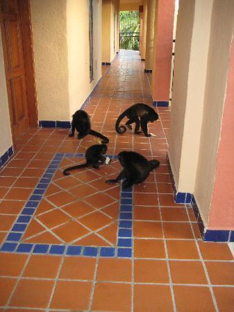 Sandos Playacar Beach Resort: Monkeys two doors down enjoying room service