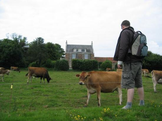 เจอร์ซีย์, UK: Jersey cows, I heard they're so famous.