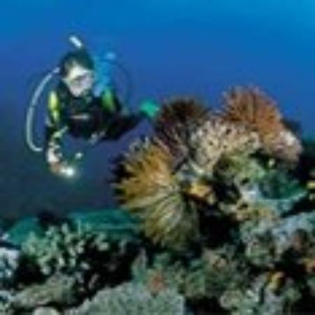 Badolato, อิตาลี: Diving in the IOnian sea