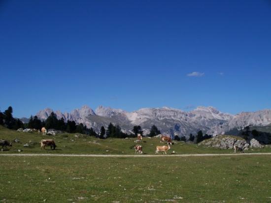 เซลวาดีวัลการ์เดนา, อิตาลี: Vista dal Passo Sella