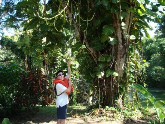 มอนทีโก เบย์, จาไมก้า: Jamaica's world-famous Blue Mountain coffee and rum,