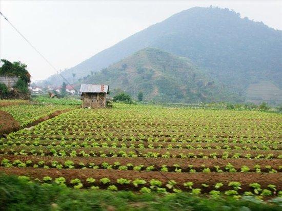 Bogor Photo