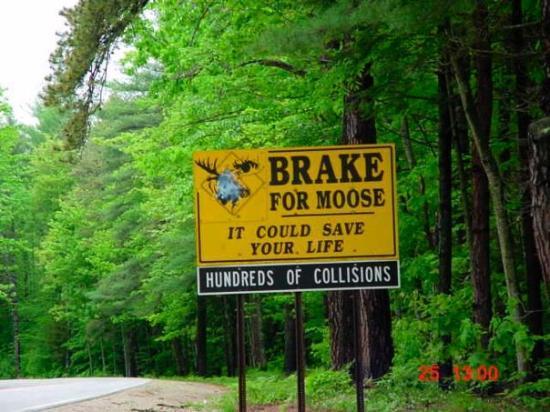 ออกัสตา, เมน: Brake for Moose! Augusta, ME, United States