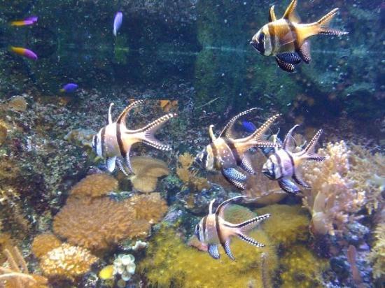 เจนัว, อิตาลี: Fish at the Genoa aquarium.