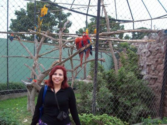 ลิมา, เปรู: En el Zoo