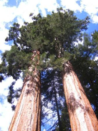 Sequoia and Kings Canyon National Park ภาพถ่าย