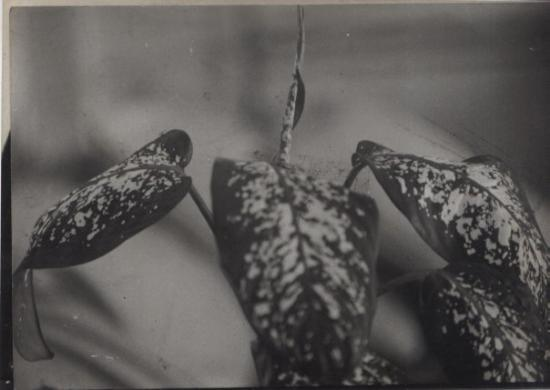 ลีเบลอวิลล์ ภาพถ่าย