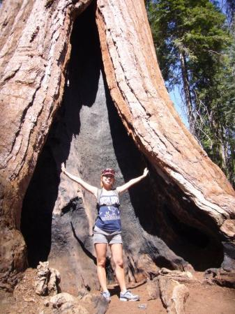 Sequoia and Kings Canyon National Park, แคลิฟอร์เนีย: Under the GIANT sequoia tree (Sequoia NP)