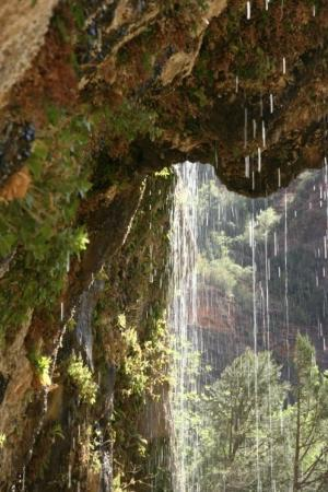Weeping Rock Trail: Zion NP - weeping Rock