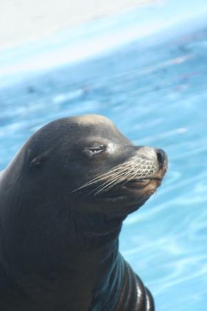 ซีเวิลด์ ซาน ติอาโก้: San Diego - Sea World