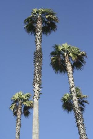 ซานดีเอโก, แคลิฟอร์เนีย: on the way to San Diego