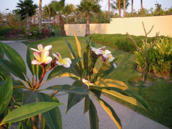 The St. Regis Punta Mita Resort ภาพถ่าย