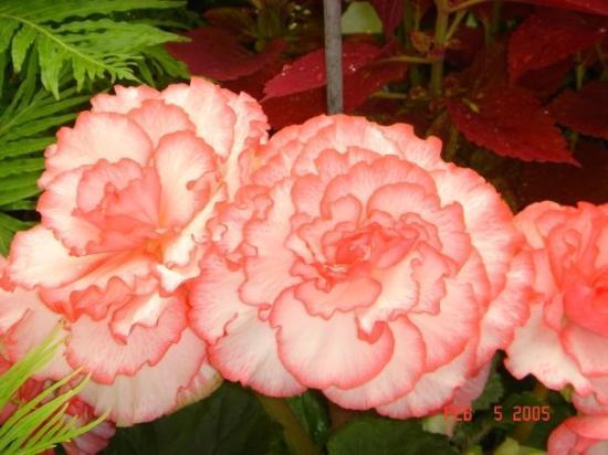 เวลลิงตัน, นิวซีแลนด์: Wellington, New Zealand Lady Norwood's Rose Garden