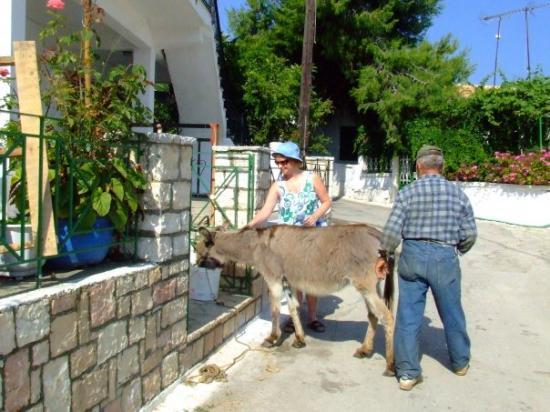 เลฟกาดา, กรีซ: wendy and a donkey in katomtri