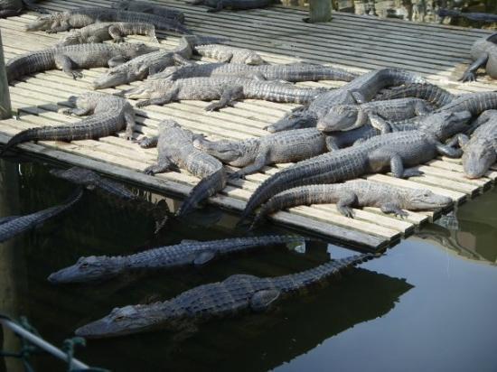 Gatorland ภาพถ่าย