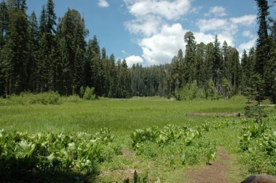 Sequoia and Kings Canyon National Park, แคลิฟอร์เนีย: Crescent Meadow in Sequoia National prak
