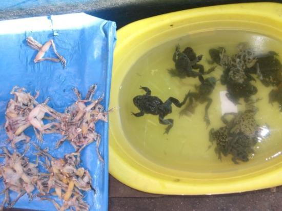 กุสโก, เปรู: Time for Lunch... Mmmm Fresh Frogs.. Get them before they jump away.