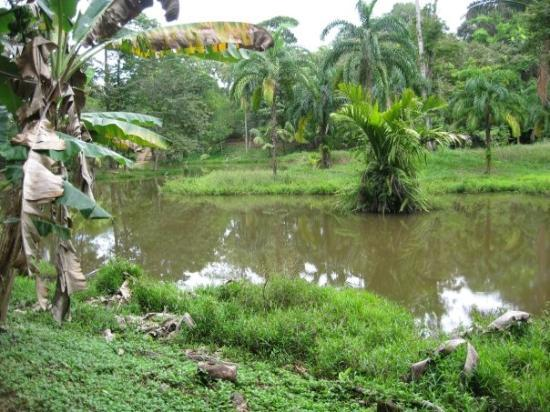 Bocas Town, ปานามา: A lagoon somewhere in Costa Rica