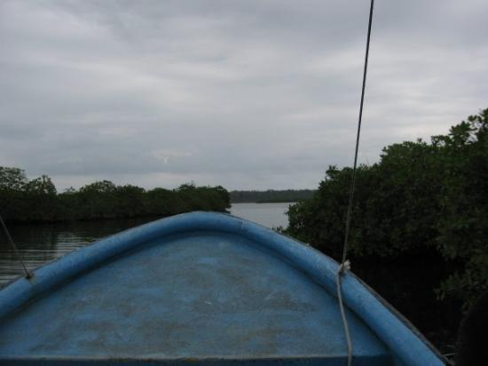 Bocas Town, ปานามา: Slamming through the glades trying to find a beach
