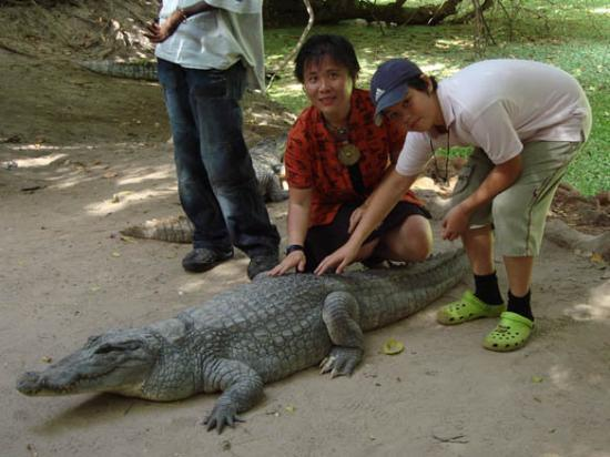 Kotu, แกมเบีย: Crocodile pool i Bakau, 1 nov
