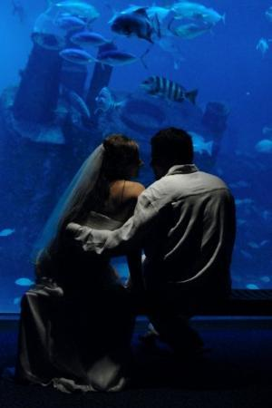 North Carolina Aquarium at Pine Knoll Shores: Destination Wedding