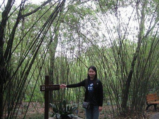 Giant Panda Breeding Research Base (Xiongmao Jidi): Way to Panda