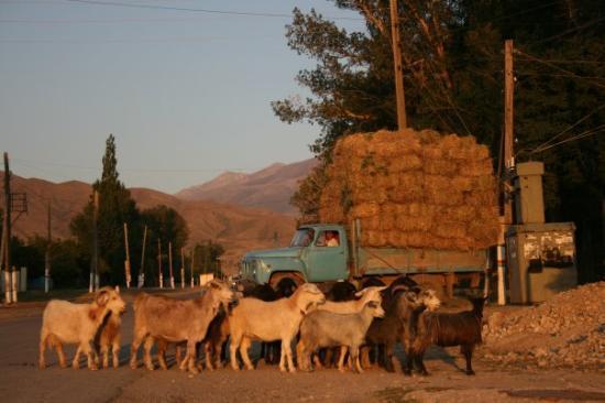 Turkestan, คาซัคสถาน: Truck