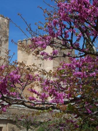 กรานาดา, สเปน: Alhambra