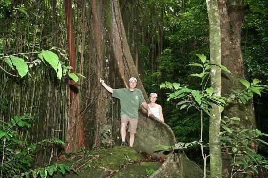 St. Kitts Captain Sunshine Tours: One of the many trees in the rainforest