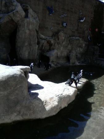 เดนเวอร์, โคโลราโด: Penguins hehe