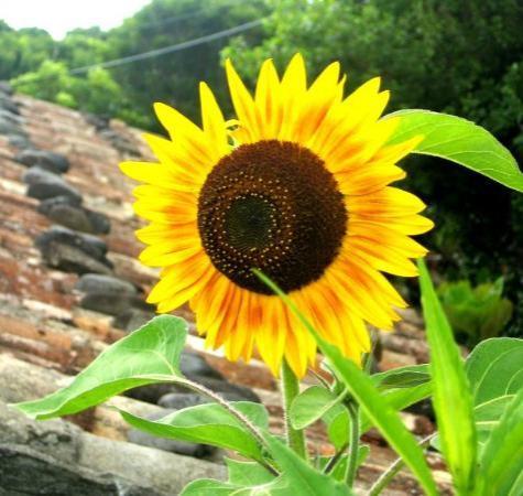 Flores ภาพถ่าย