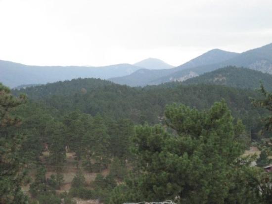 Evergreen-bild