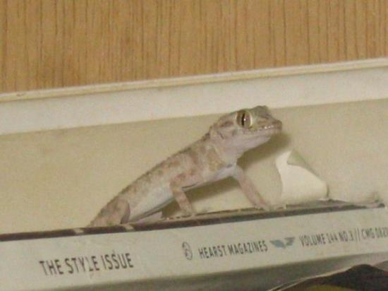 Baghdad, อิรัก: My Buddy Geico the Geko...