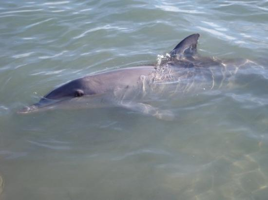 these are the dolphins in monkey mia,